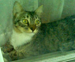Morgan bright eyes in window